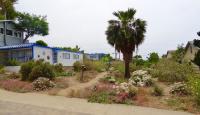 channel islands natives landscaping, san diego natives landscaping
