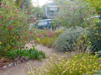 channel islands landscape design, san diego natives landscaping, channel islands native landscaping