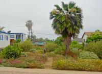 San Diego Southern California native landscaping, san diego native landscapes