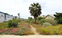 channel islands native landscaping, san diego native landscaping, san diego drought tolerant landscaping