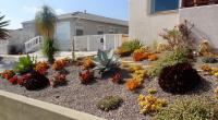 san diego succulent landscaping, succulent and cactus landscape, san diego drought tolerant landscaping