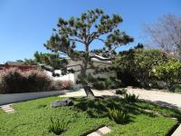 san diego landscape design, low water