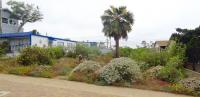 san diego drought tolerant landscaping, channel islands natives landscaping, san diego natives landscaping