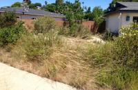 san diego native landscaping, san diego natives landscaping