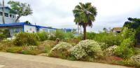 san diego native plant landscaping, native landscaping, habitat style landscaping