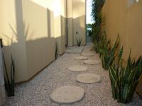 san diego landscape design, sansevieria