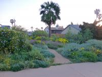 san diego drought tolerant landscaping, san diego natives landscaping, california habitat style landscaping