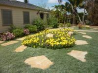 san diego landscape design, dymondia lawn