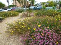 Southern California native landscaping, san diego native landscaping