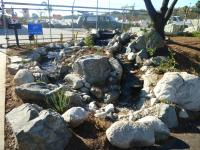 san diego native landscaping, san diego drought tolerant landscaping