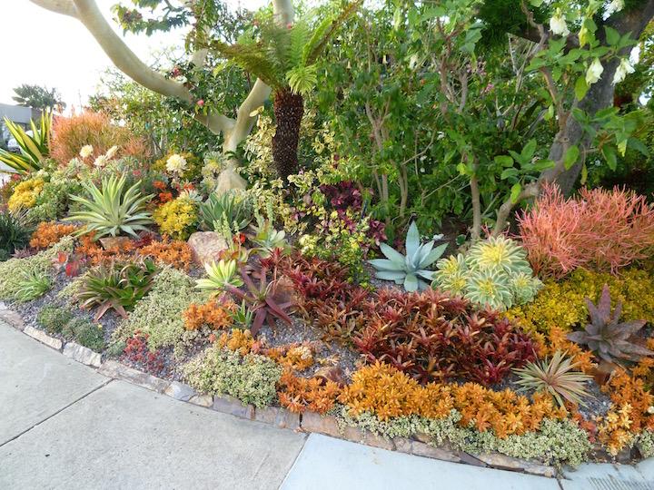 UC Marin Jardinero Maestro: Suculentas son hermosas y construidas para la sequía
